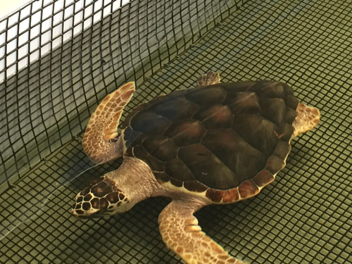 turtle barn 8